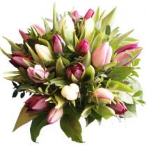 Smukke Tulipaner.